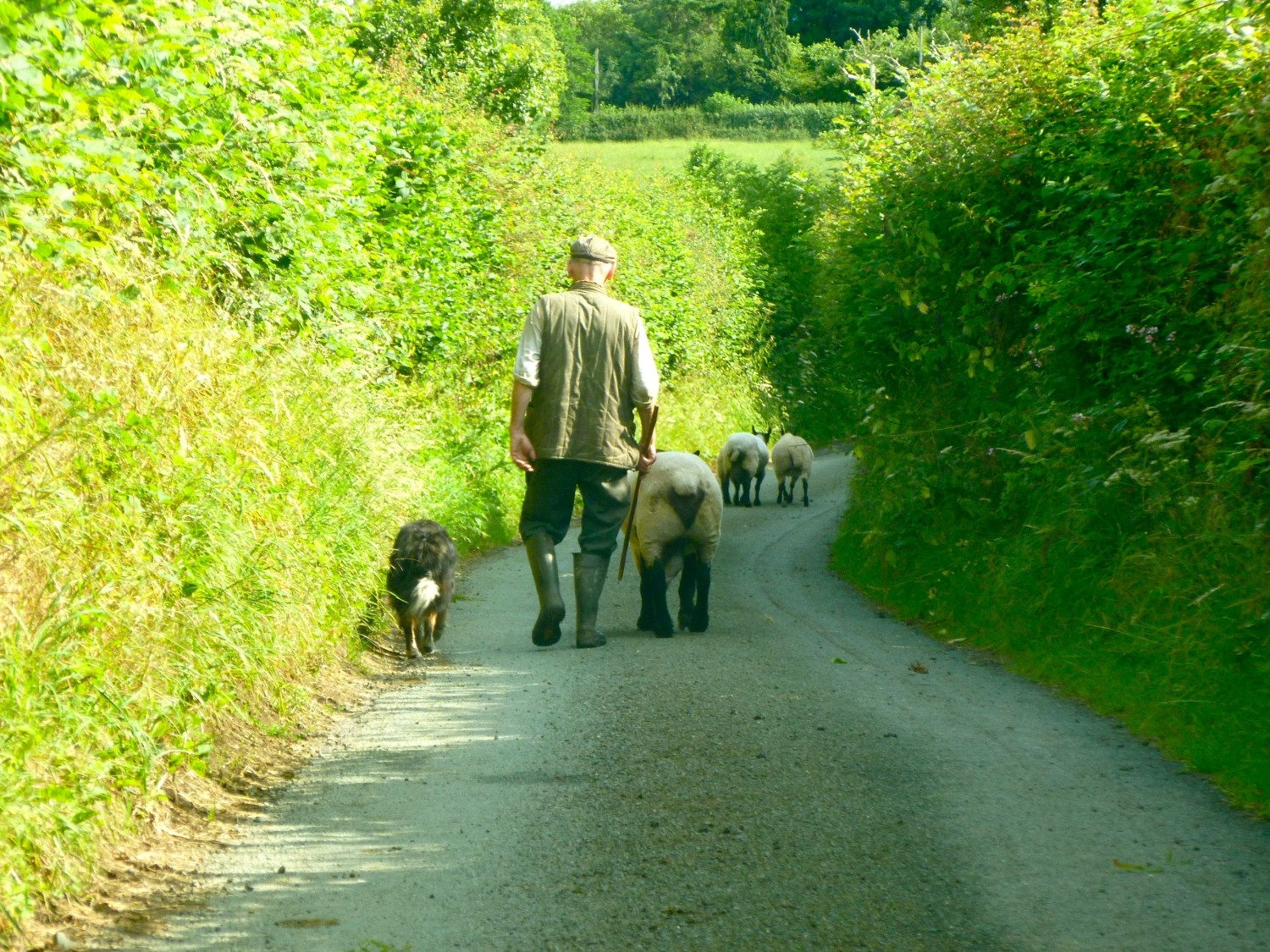 A South Shropshire traffic jam